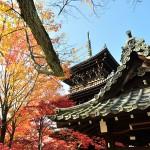京都の秋を探しに、紅葉が綺麗な真如堂。2014年11月23日