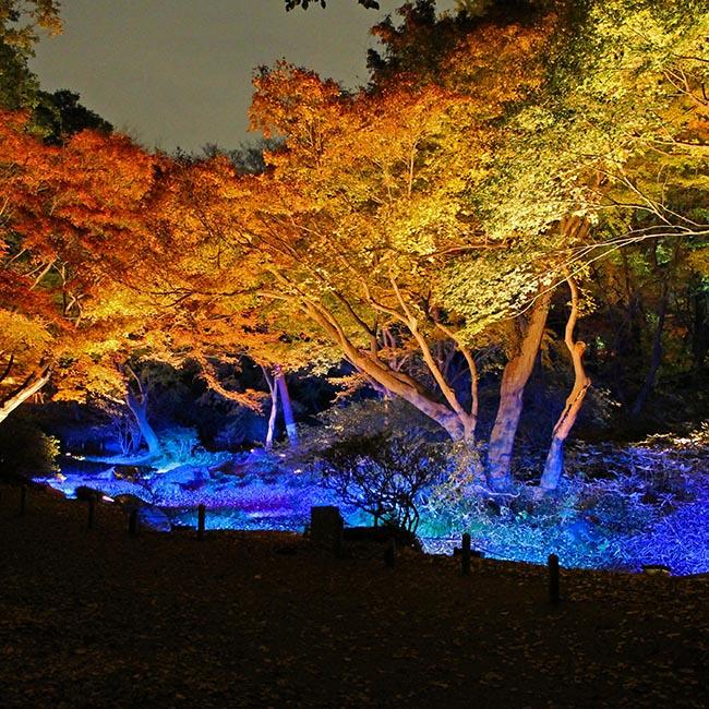 秋のライトアップにうっとりしながら、抹茶をいただく贅沢を都内で楽しむ。